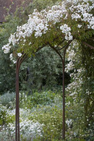 rosa-mulliganii-white-garden-sissinghurst-english-garden.jpg