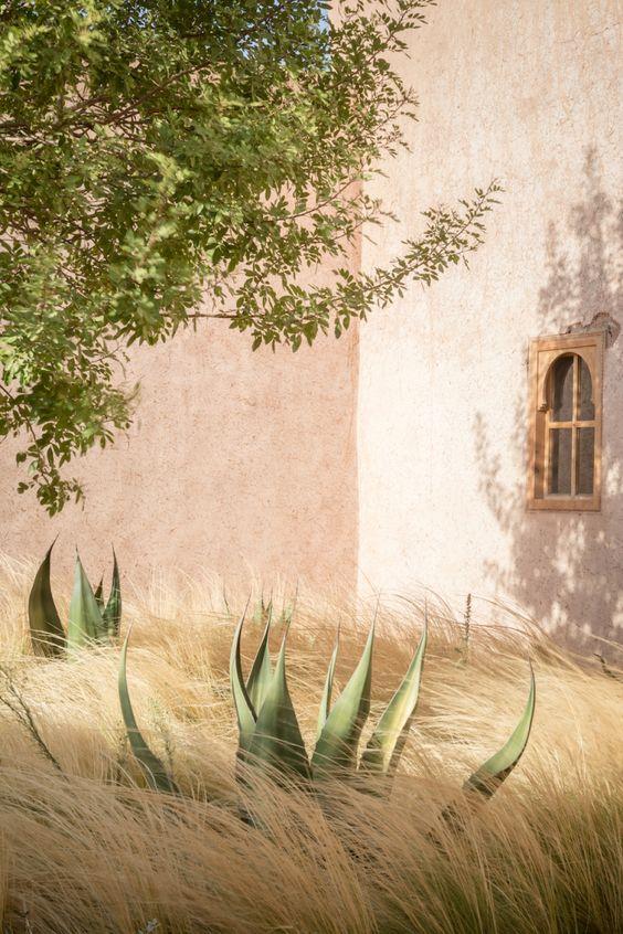 berber-lodge-morocco-garden-arnaud-casaus-stipa-tenuissima.jpg