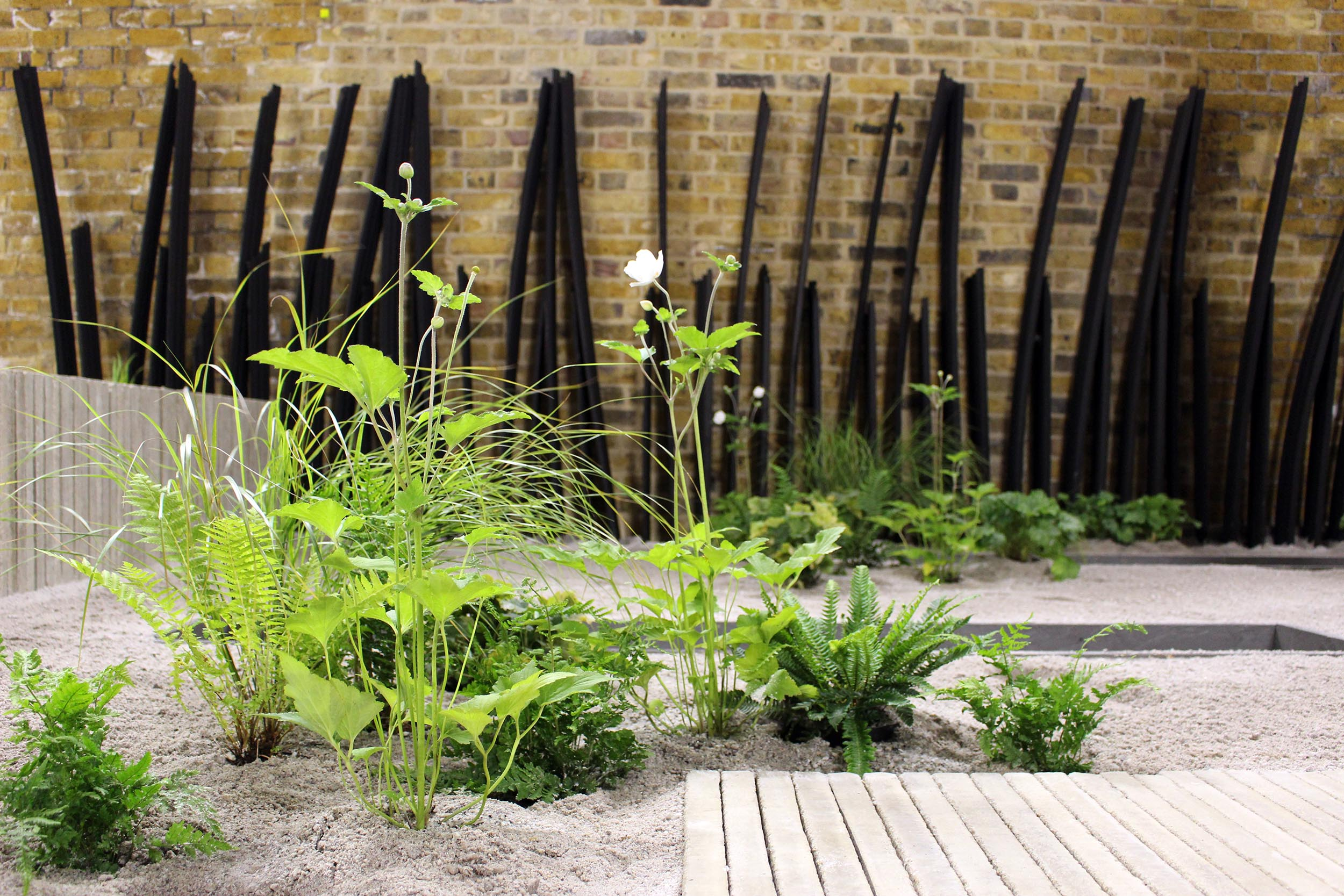 london-bridge-garden-planting-ferns-stipa-arundinacea.jpg