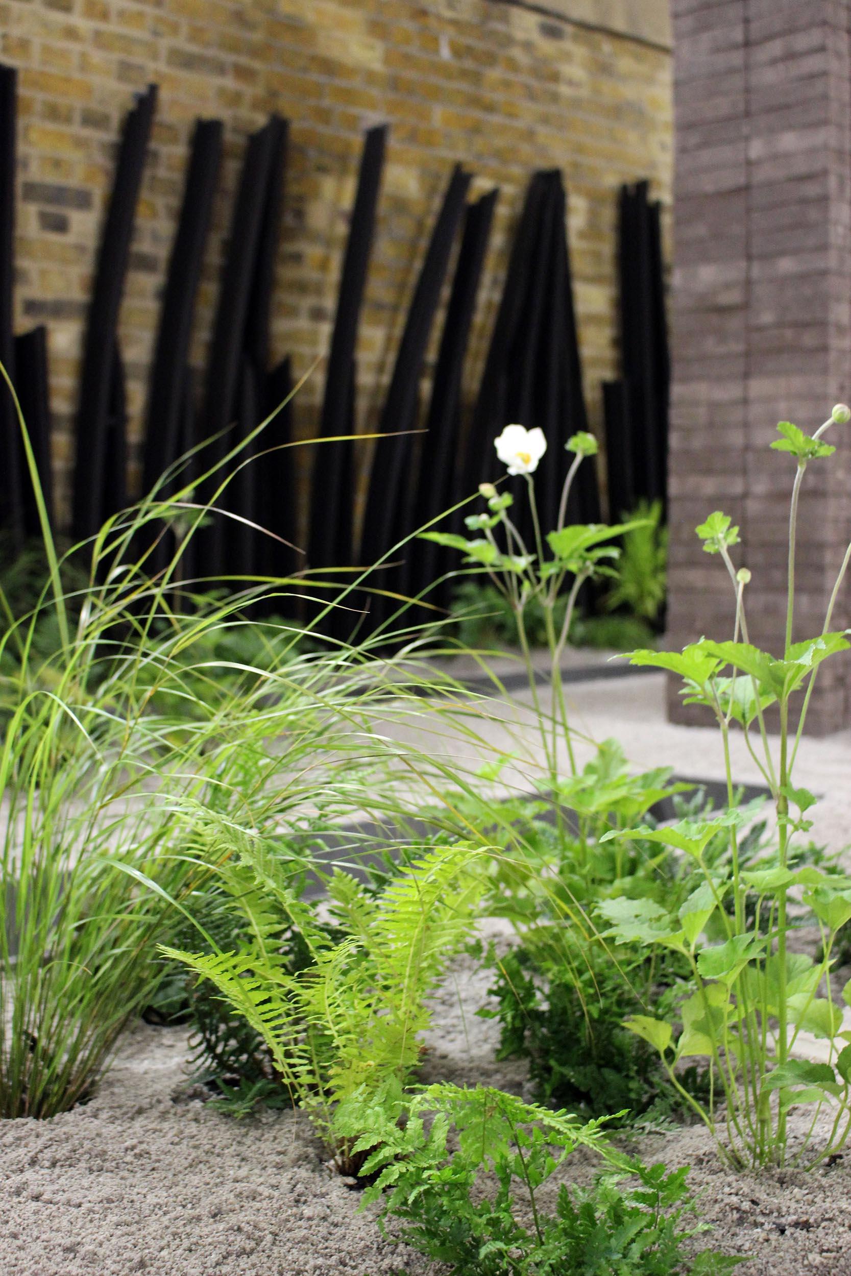 london-bridge-garden-ferns-pheasants-tail-grass.jpg