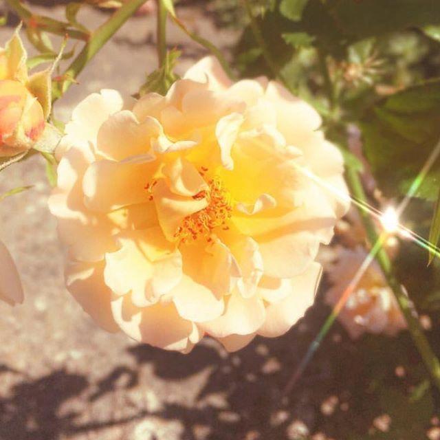 Another angelic flower by @zeewipark 💛 imma fan