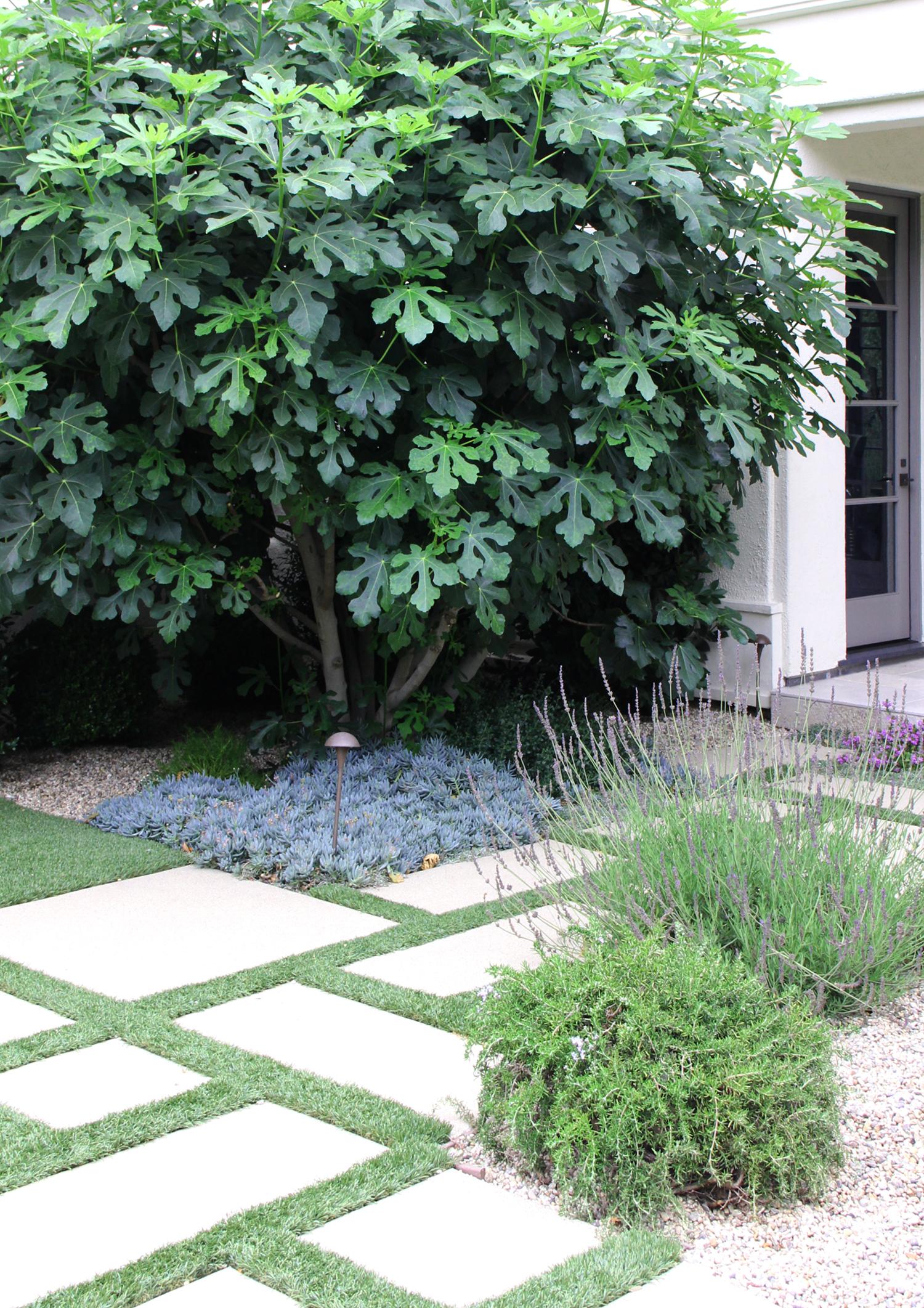 homewood-road-garden-5ps.jpg