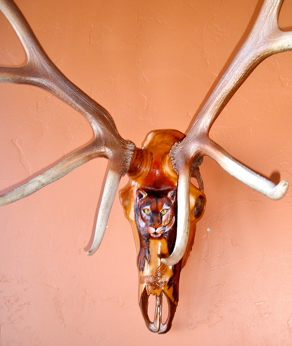 The Mountain Lion Skull Click a thumbnail to see slideshow