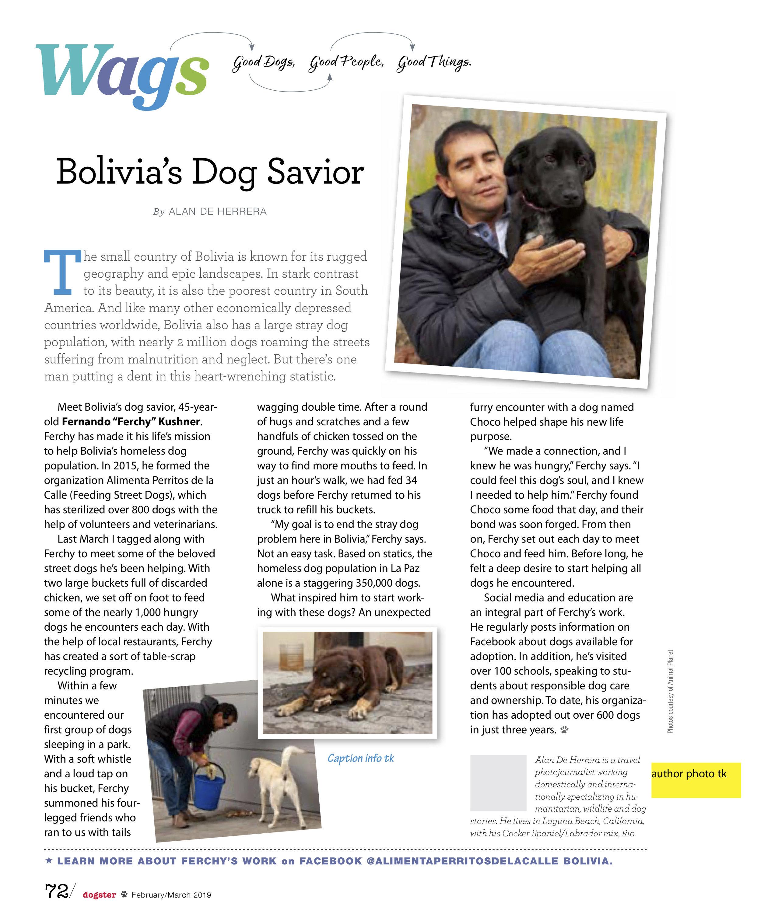 Dogster_Bolivia.jpg
