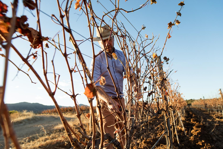 Argentinian winemaker Matias Gutierrez - Campos De Solana winery