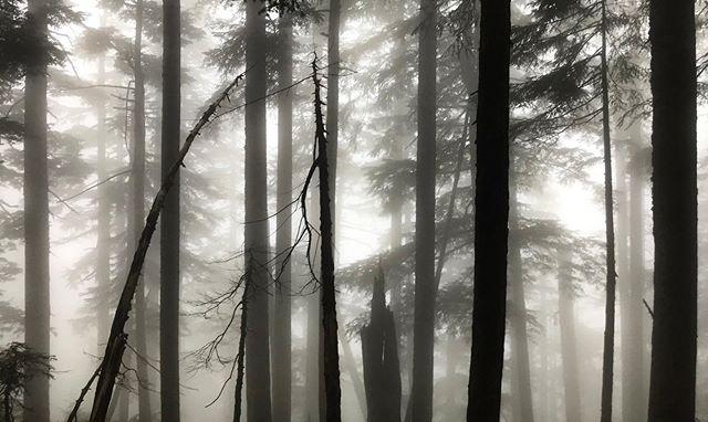 Hiking through the mist.