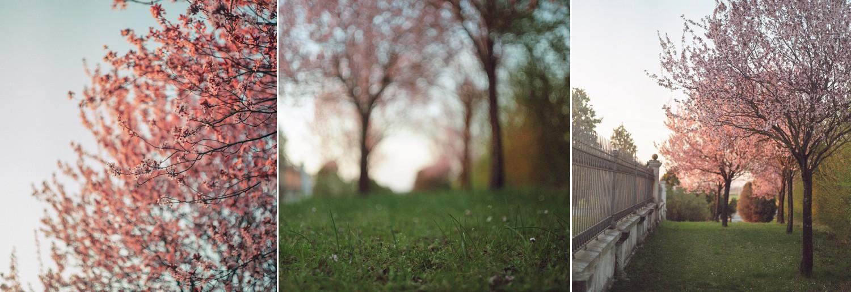 spring-film-pentaconsix-kodakportra800-L&Vphotography
