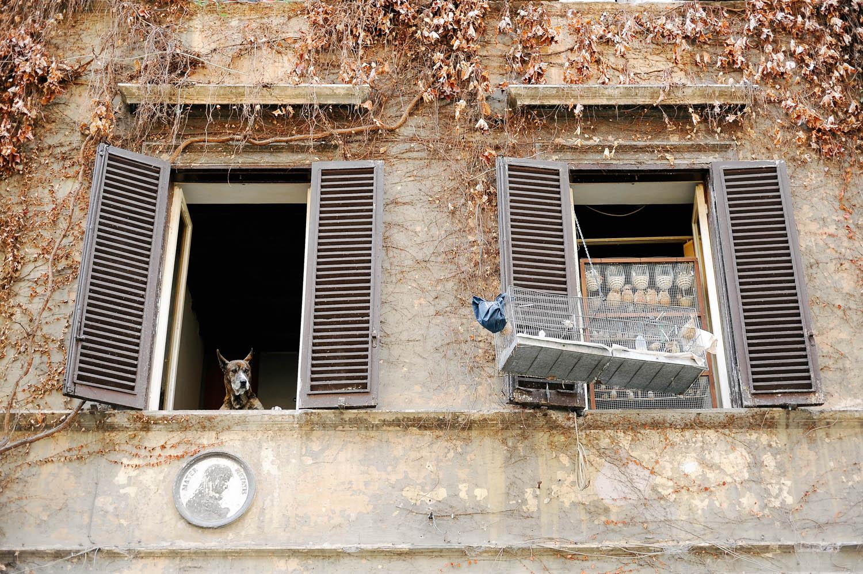 Roma-3.jpg