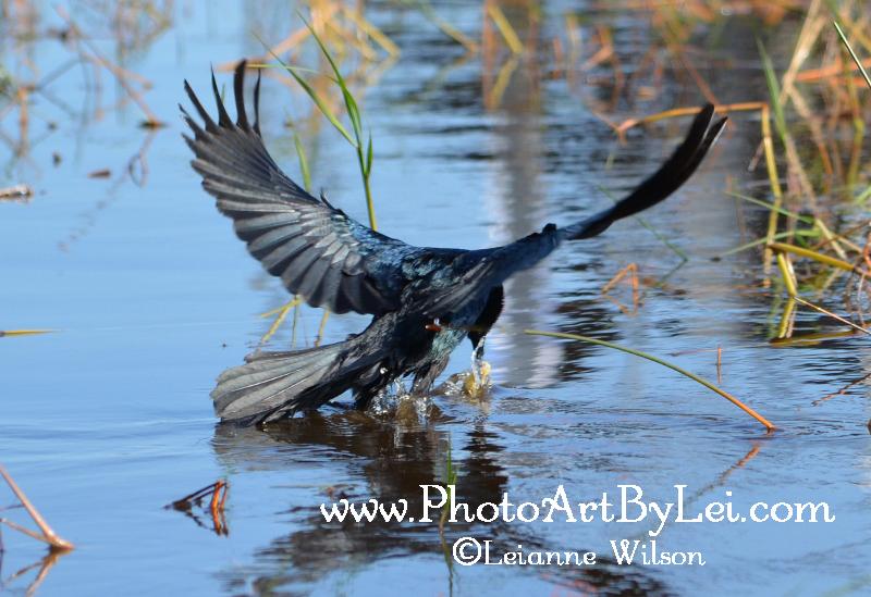 fishing-bird (800x549).jpg