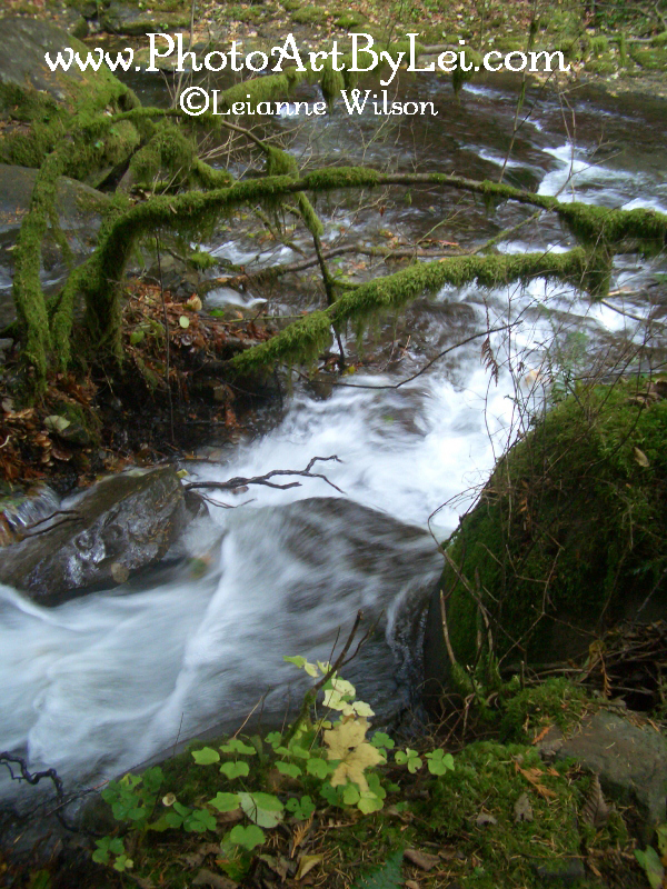 flowing-fall-b (600x800).jpg