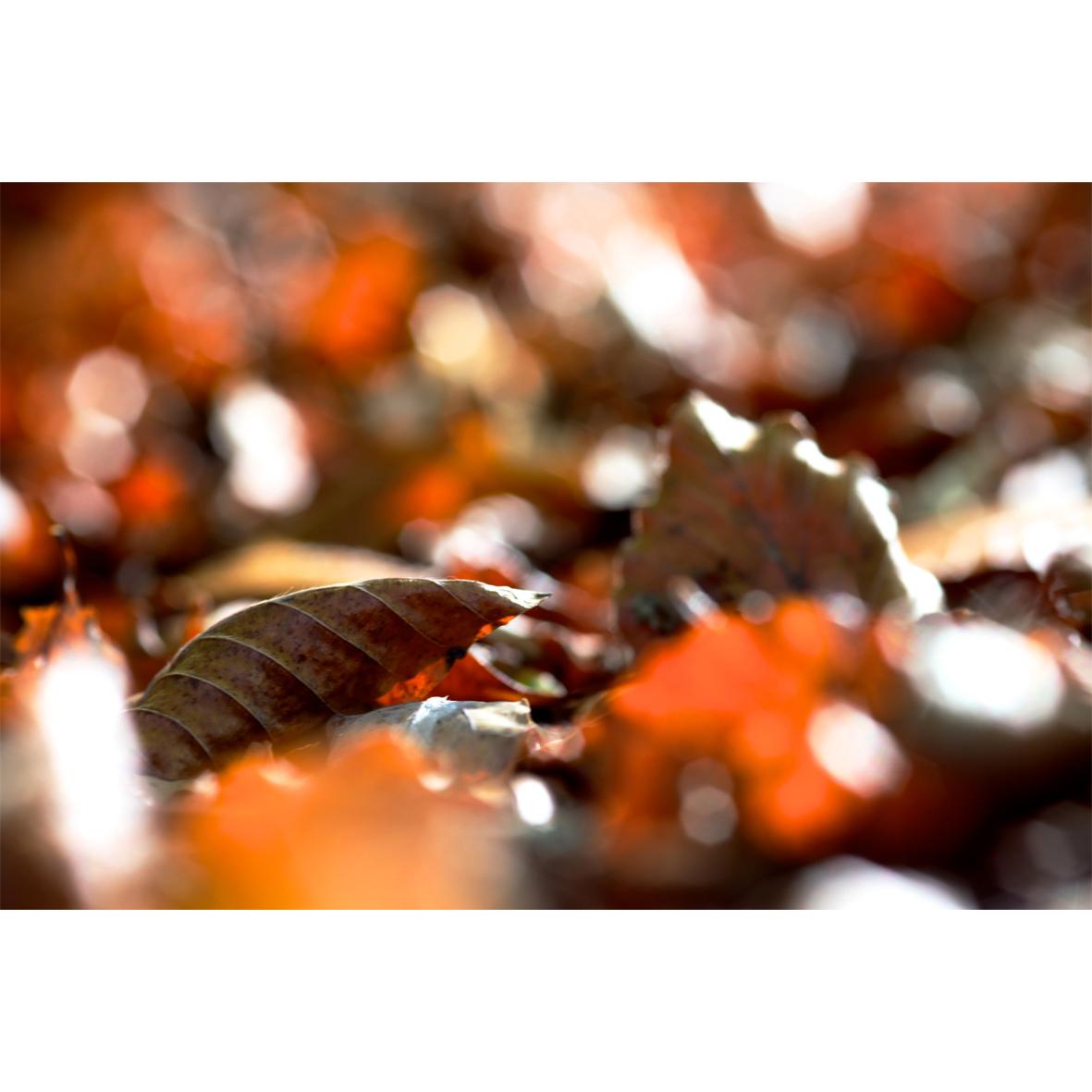 leaf07.jpg