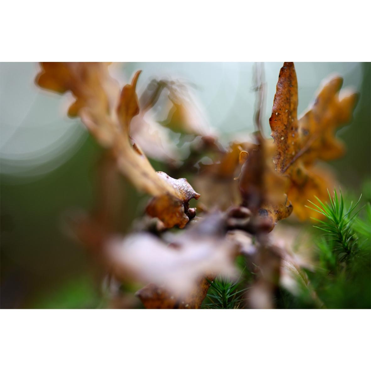 leaf08.jpg