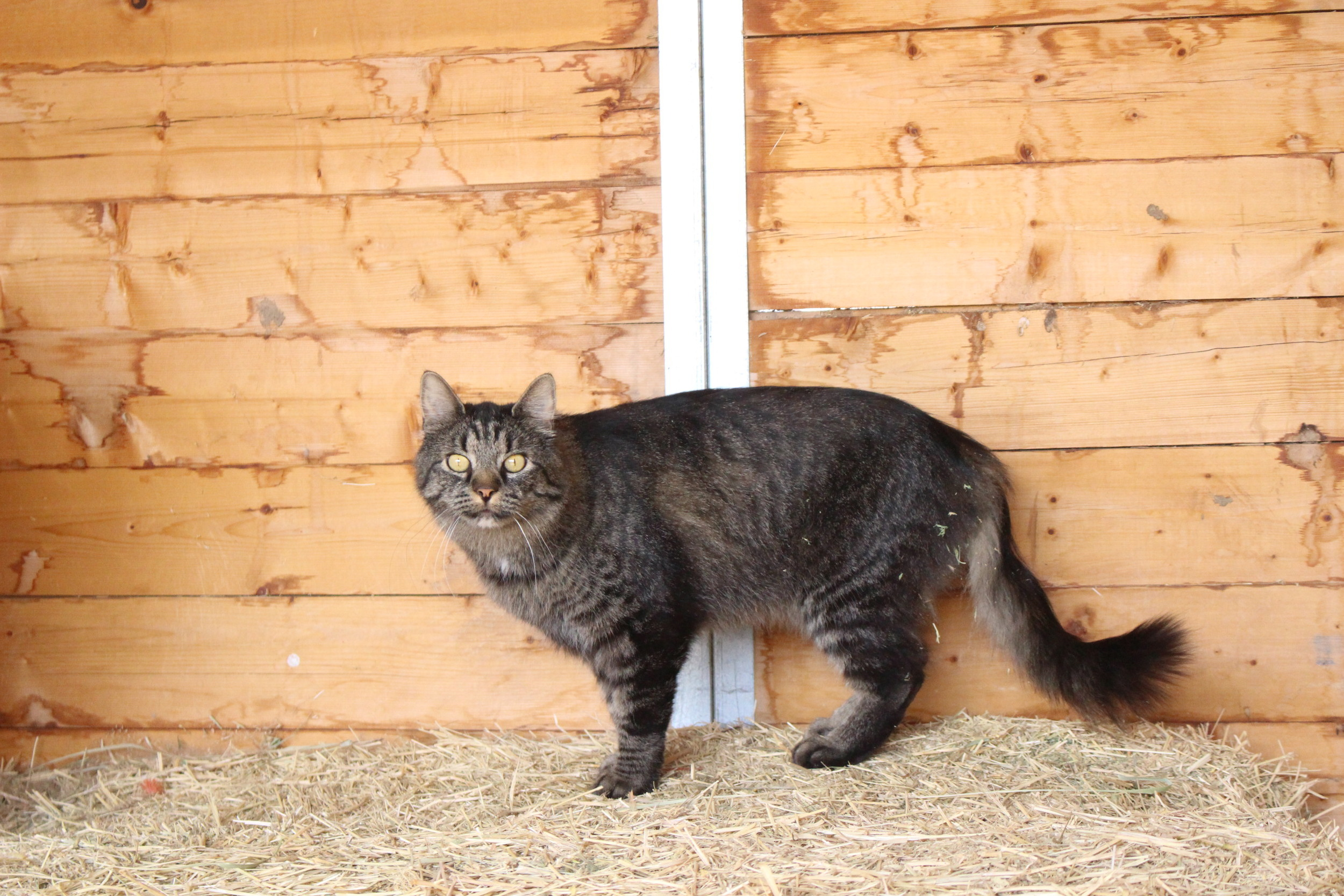 Rascal, one of the barn cats.