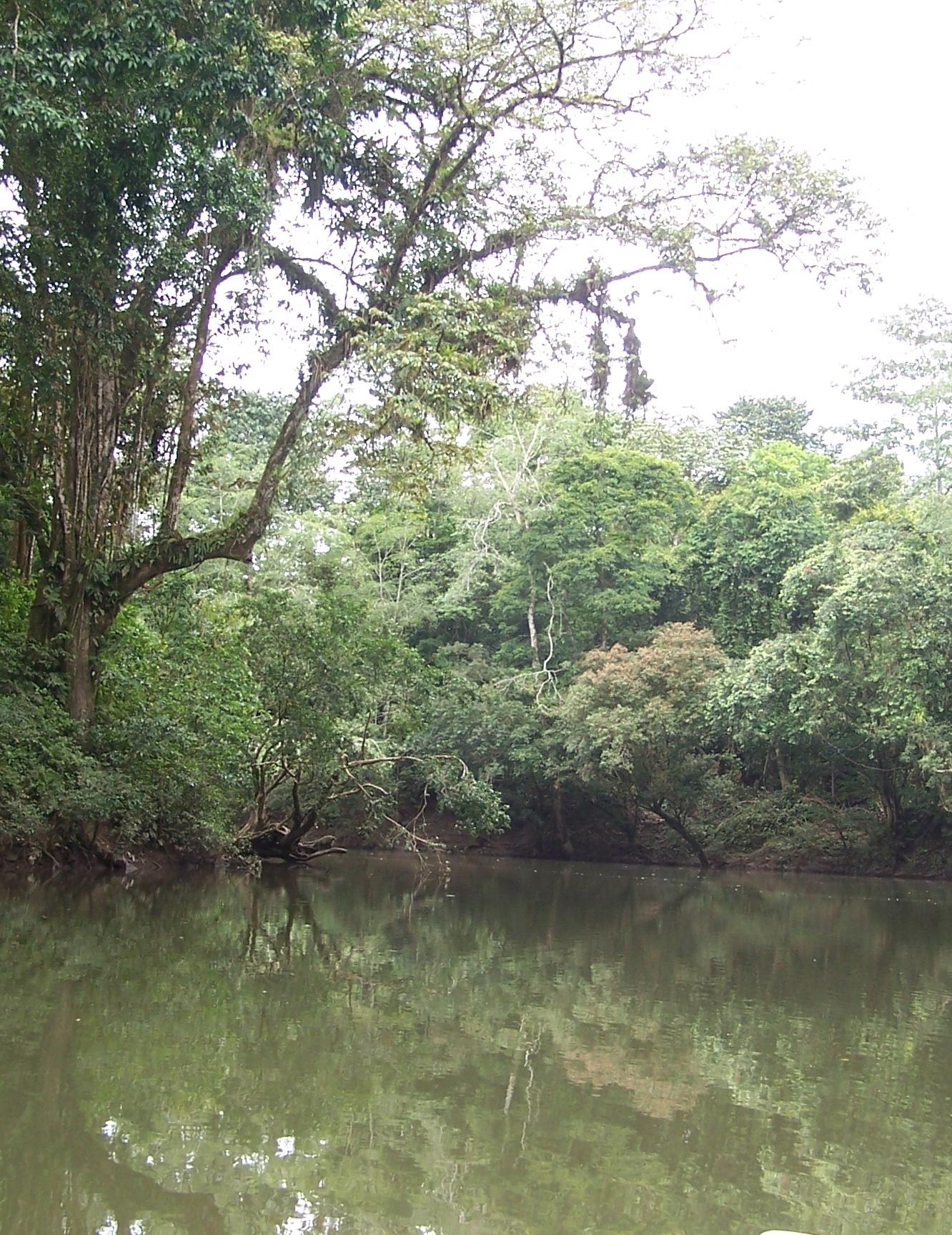 PuertoViejo.River.JPG