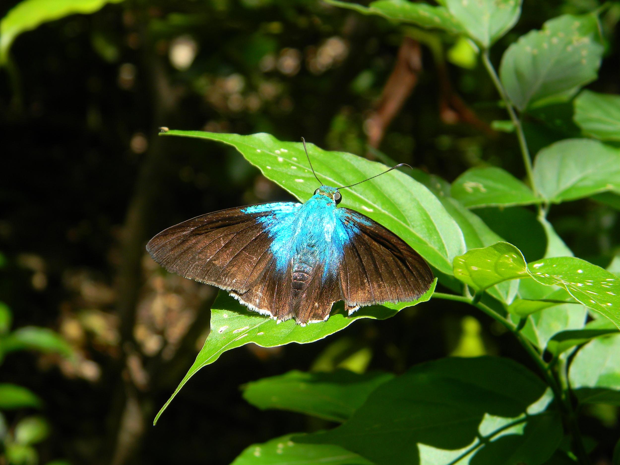 Skipper.Butterfly.JPG