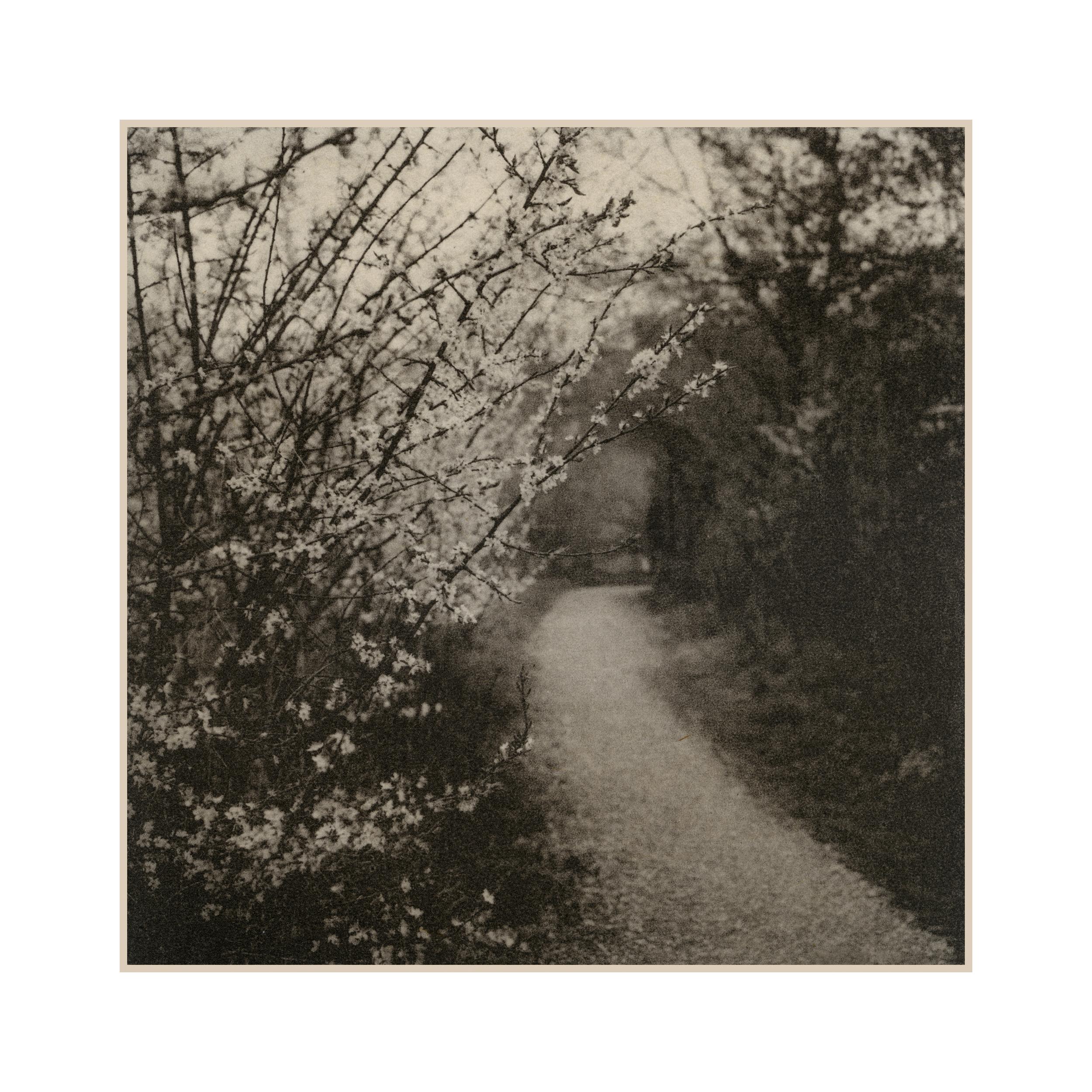 1 Path.jpg