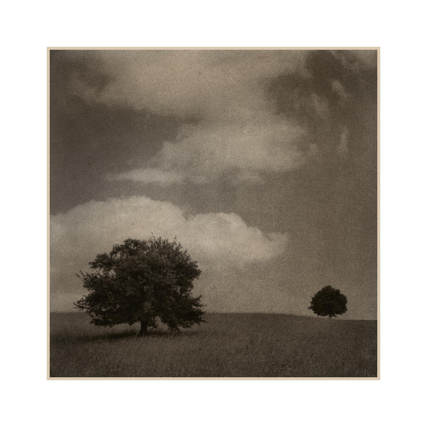 7 Two Trees.jpg