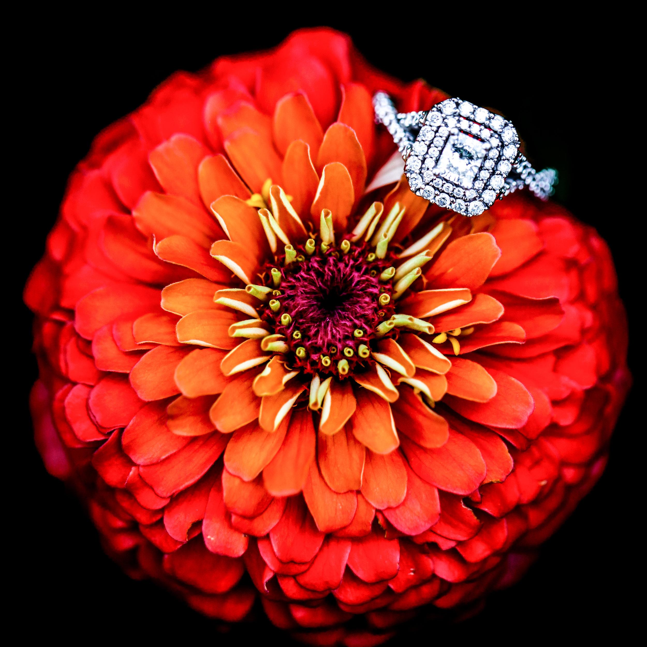 WeddingWebsite-58.jpg