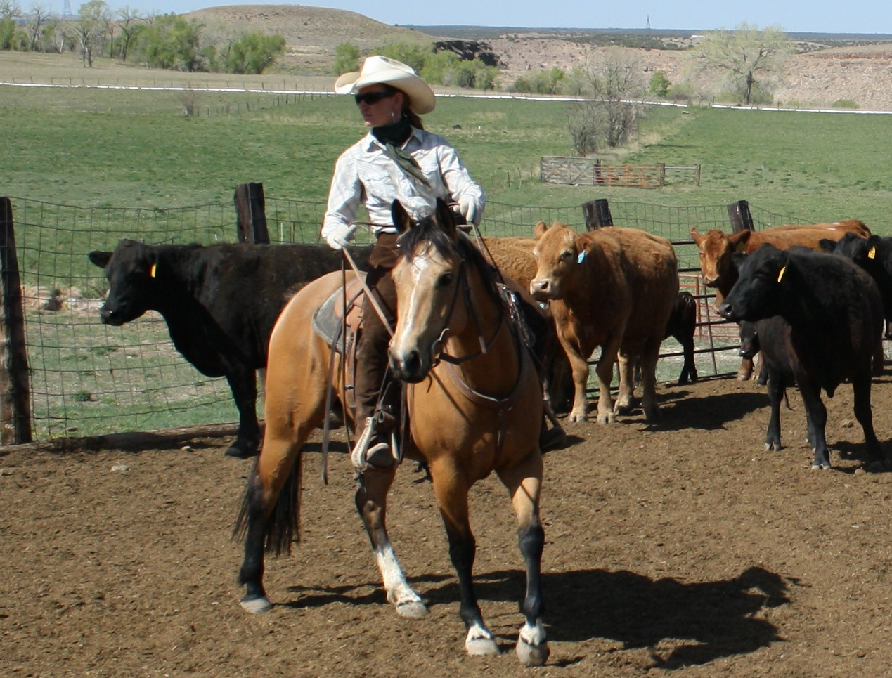 Working Ranch Horse