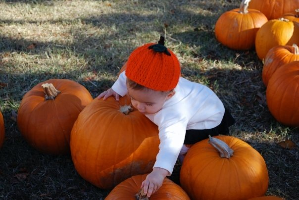 If you look closely you'll see a precious little girl in that pumpkin patch picking out her first pumpkin. That's Karlee: grand girl #1.