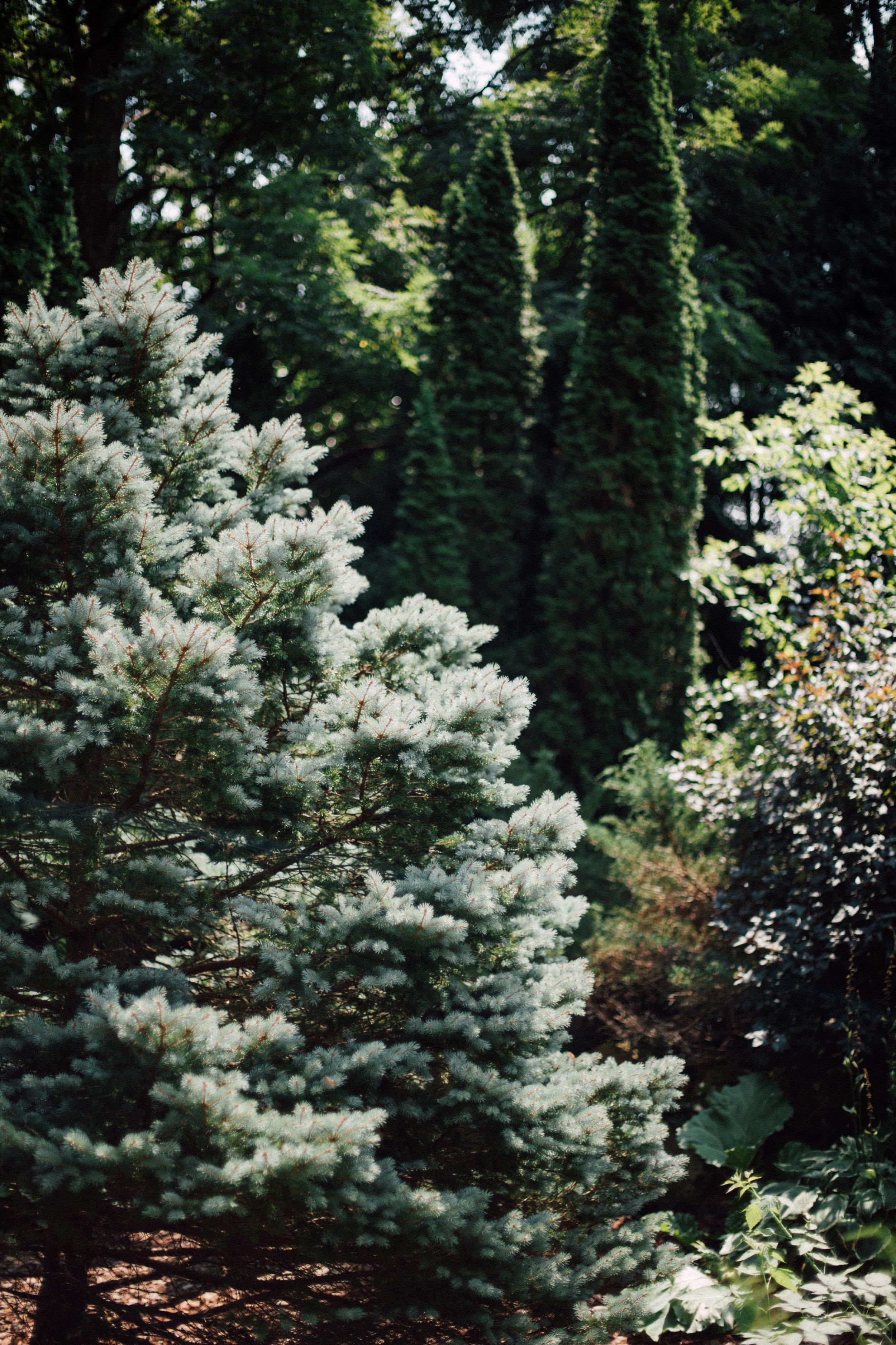 chelsea daniel-1267.jpg