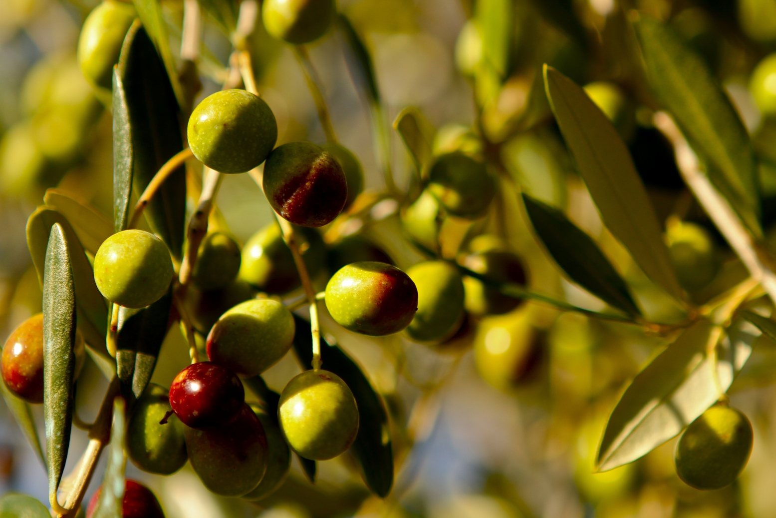 Our olives come from around the world, and are processed in two mills: Austrailia and Tunisia.