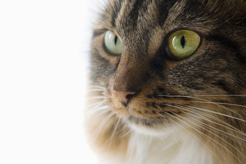 Cat_Photography-2.jpg