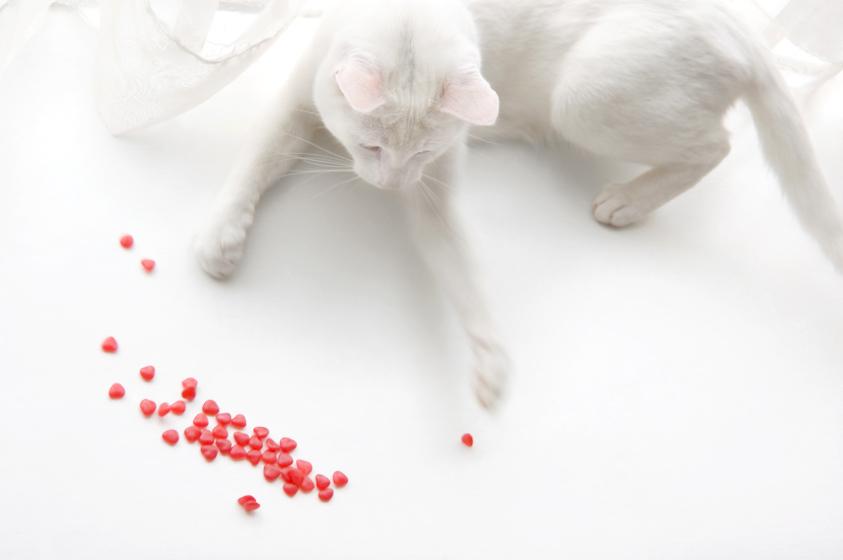 Cat_Photography-1.jpg