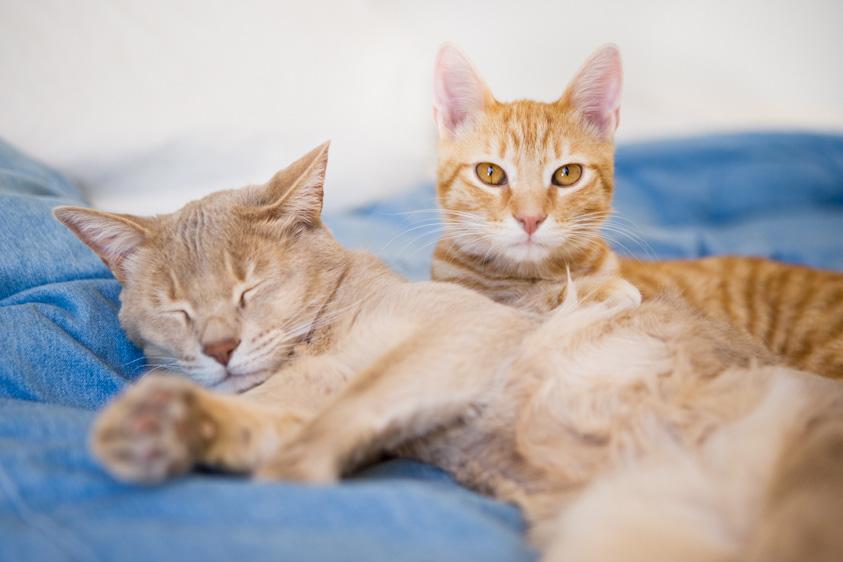 Cat_Photography-5.jpg