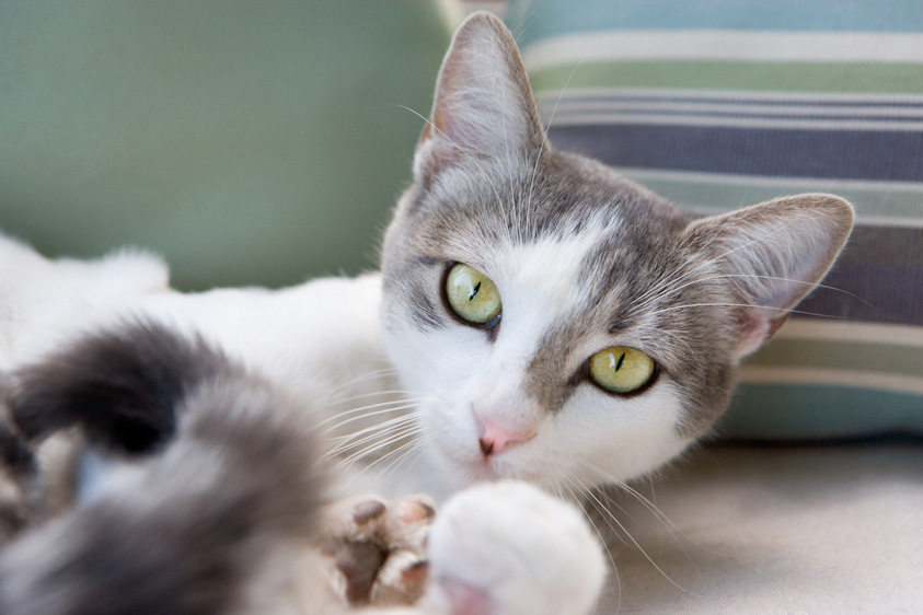 Cat_Photography-6.jpg