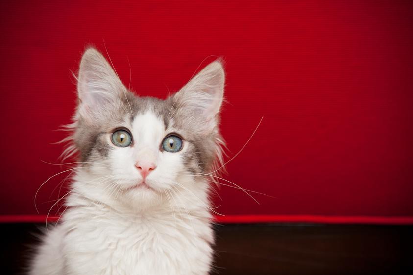 Cat_Photography-8.jpg