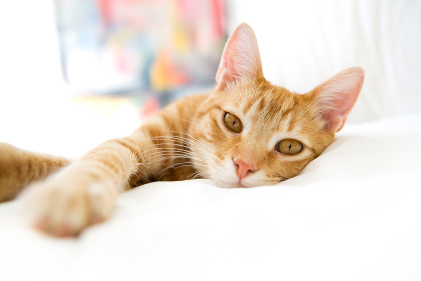 Cat_Photography-7.jpg