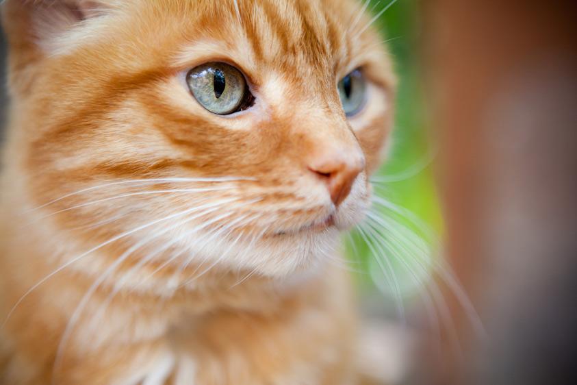Cat_Photography-11.jpg