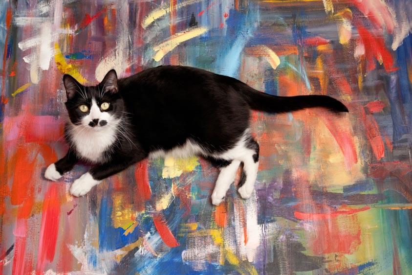 Cat_Photography-10.jpg