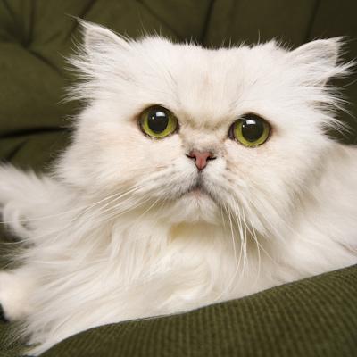 Cat_Photography-12.jpg