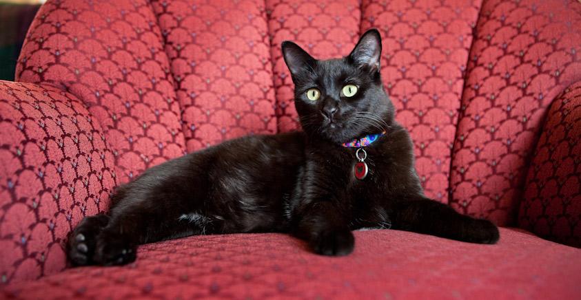 Cat_Photography-29.jpg