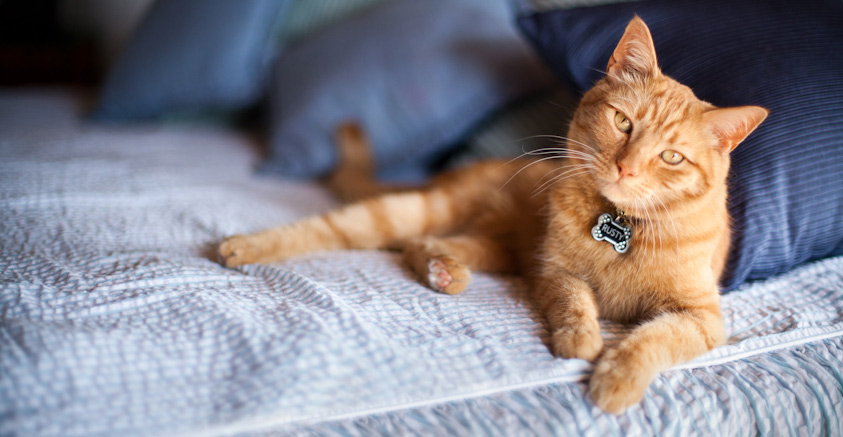 Cat_Photography-30.jpg