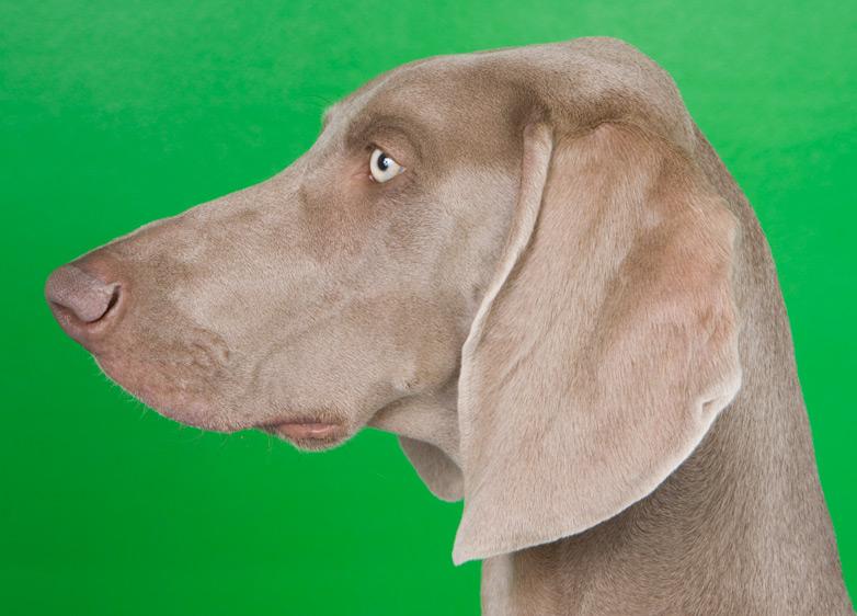 Dog_Photography_04.jpg