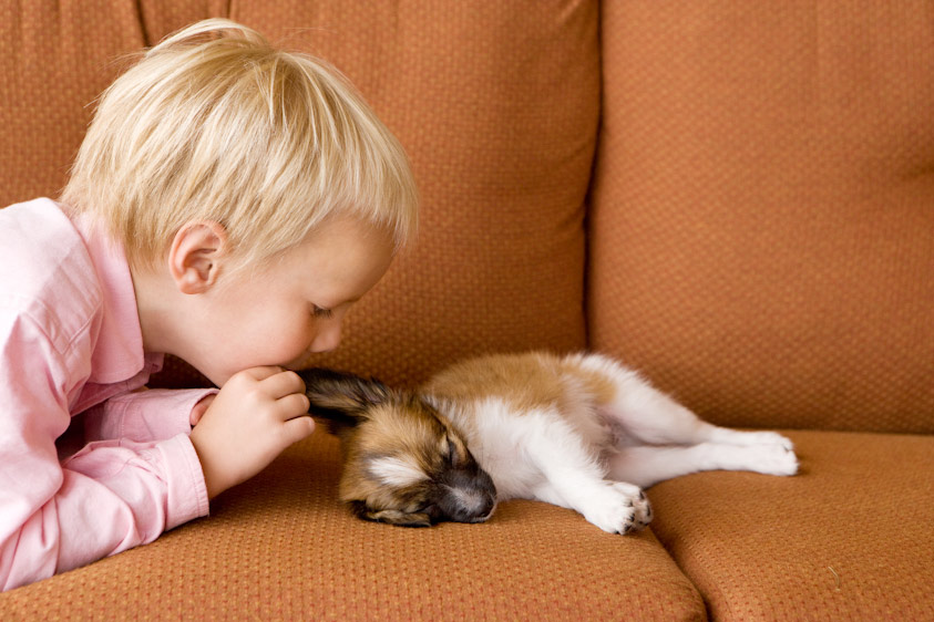Dog_Photography_08.jpg