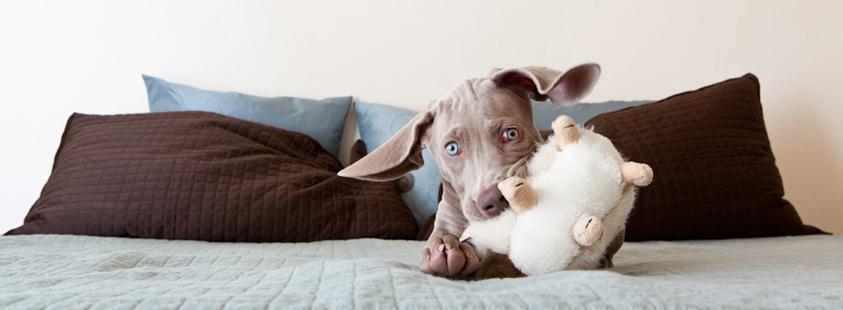 Dog_Photography_16.jpg