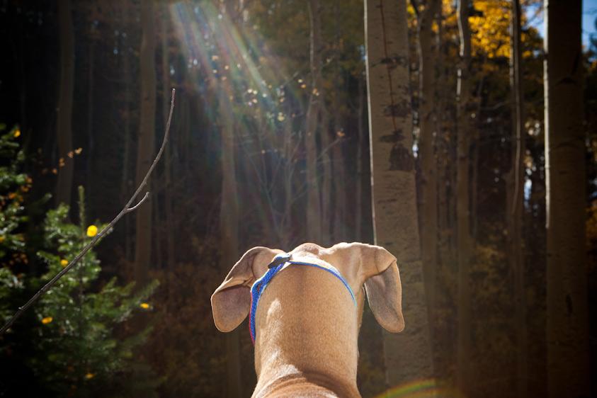 Dog_Photography_18.jpg