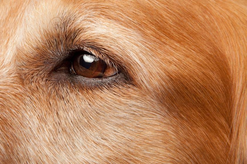 Dog_Photography_22.jpg