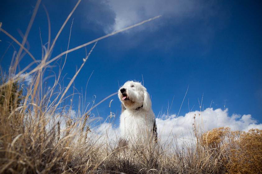 Dog_Photography_31.jpg