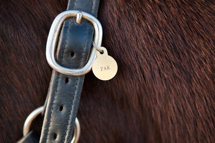 Horse_Photography-8.jpg