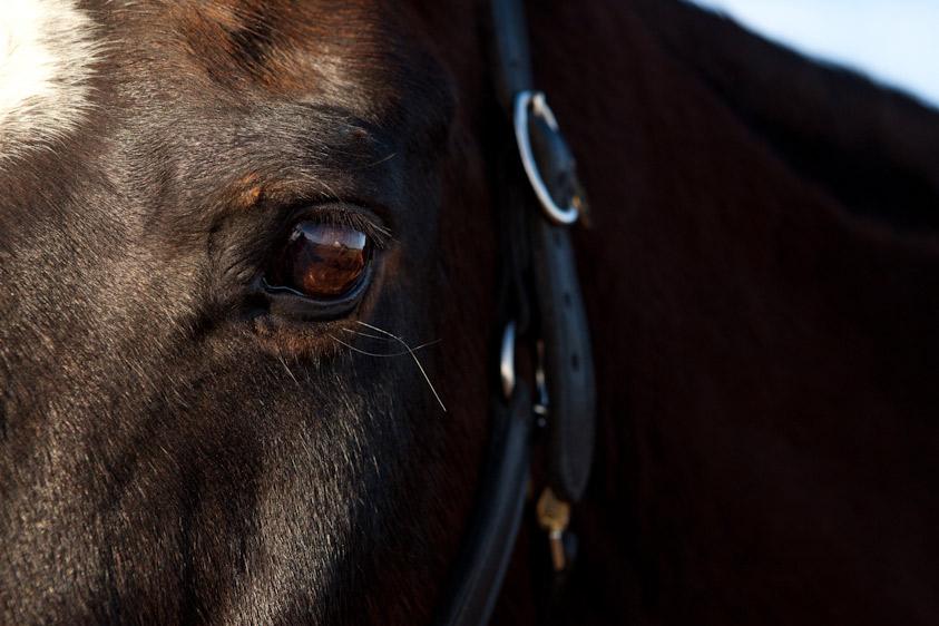 Horse_Photography-9.jpg