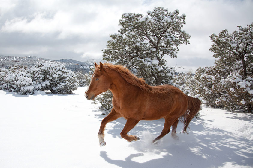 Horse_Photography-10.jpg