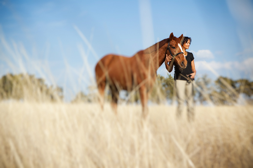 Horse_Photography-15.jpg