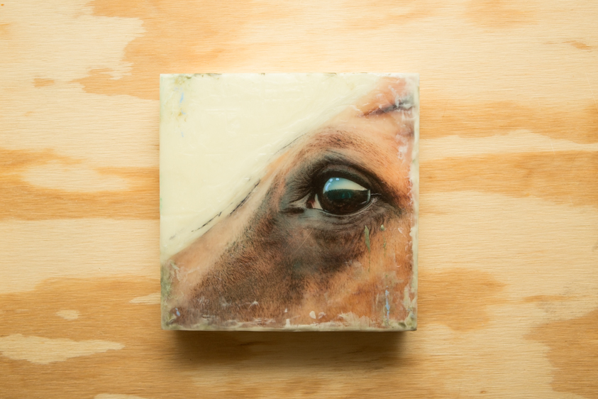 Horse#1-001-8x8-4.jpg