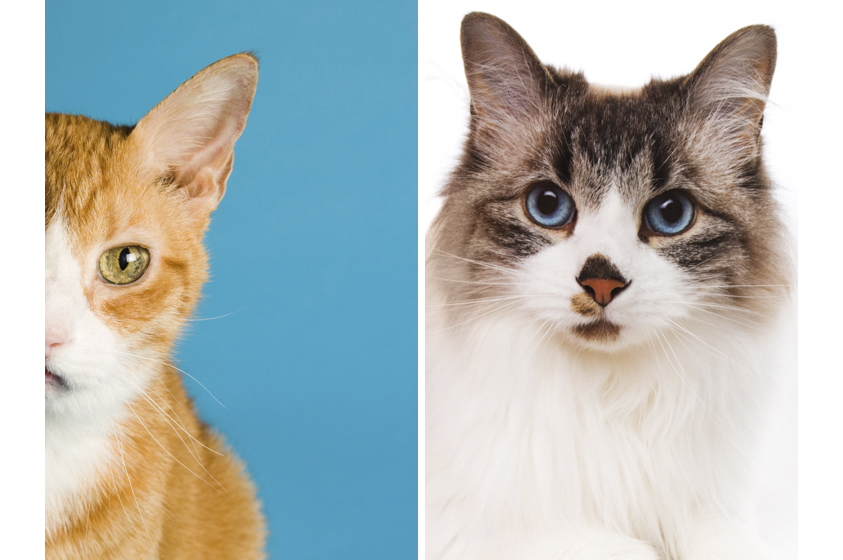 Cat Photography-2.jpg