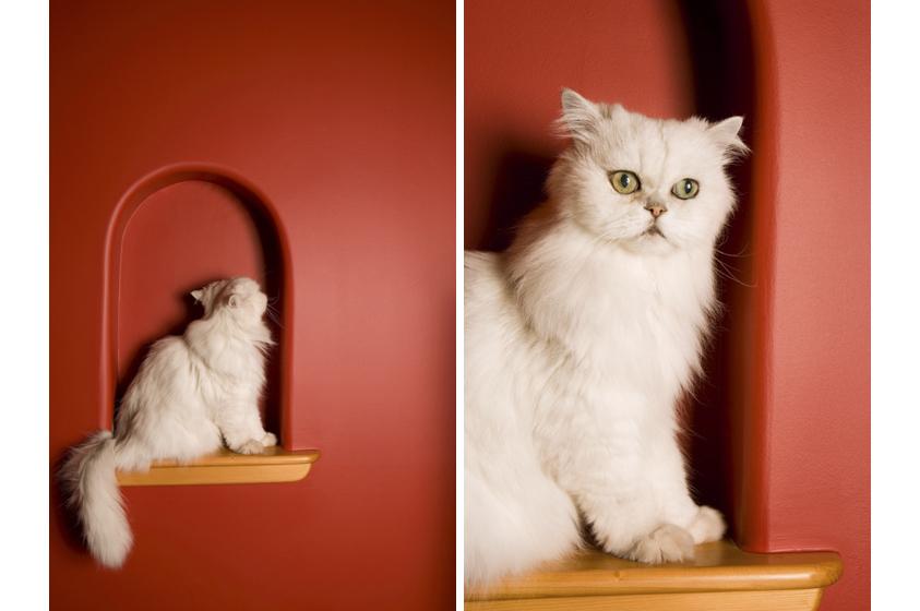 Cat Photography-3.jpg